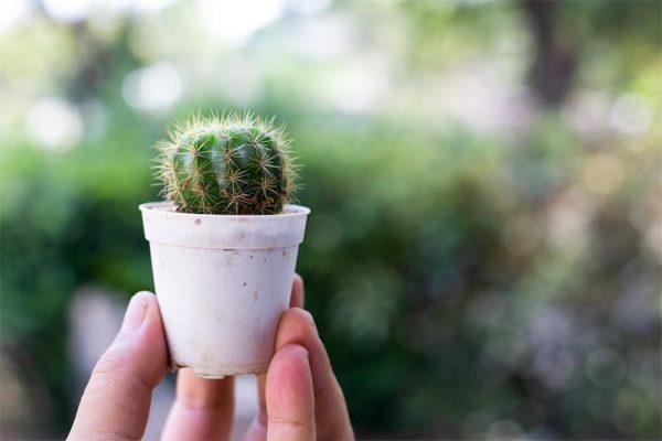 Planten maken je werkomgeving gezonder